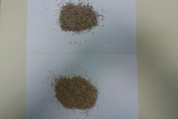 triage-quinoa1E1DE219-FC27-0165-A39D-BBBC13B99C06.jpg