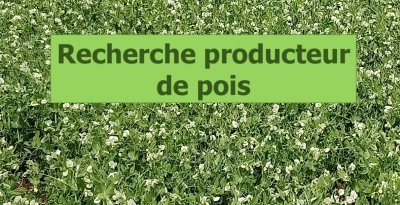 Production pois récolte 2019